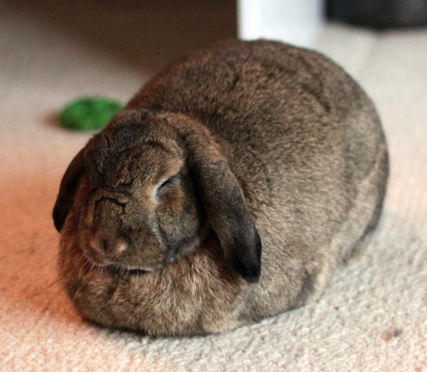 Cinnamon being the Cadbury bunny