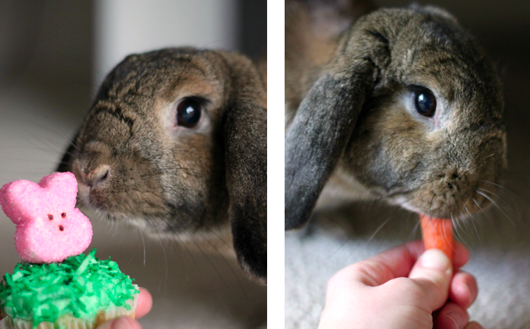 Cinnamon the bunny approves cupcake and eats carrot