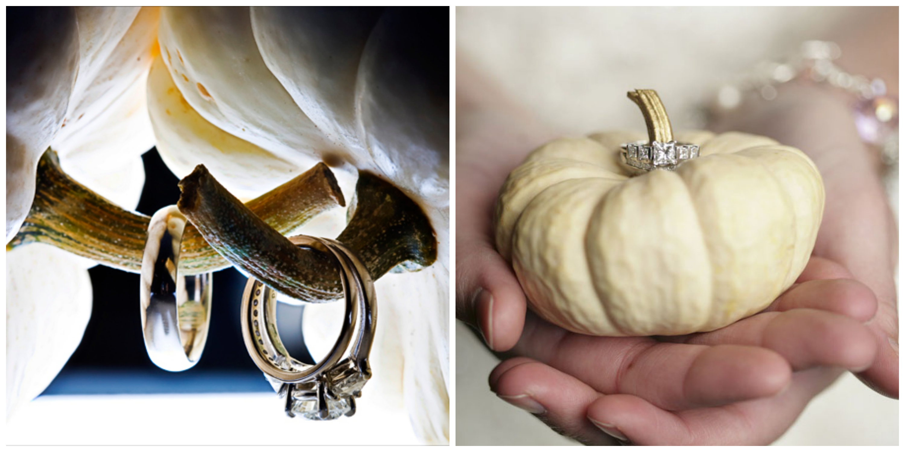White pumpkin wedding ring prop
