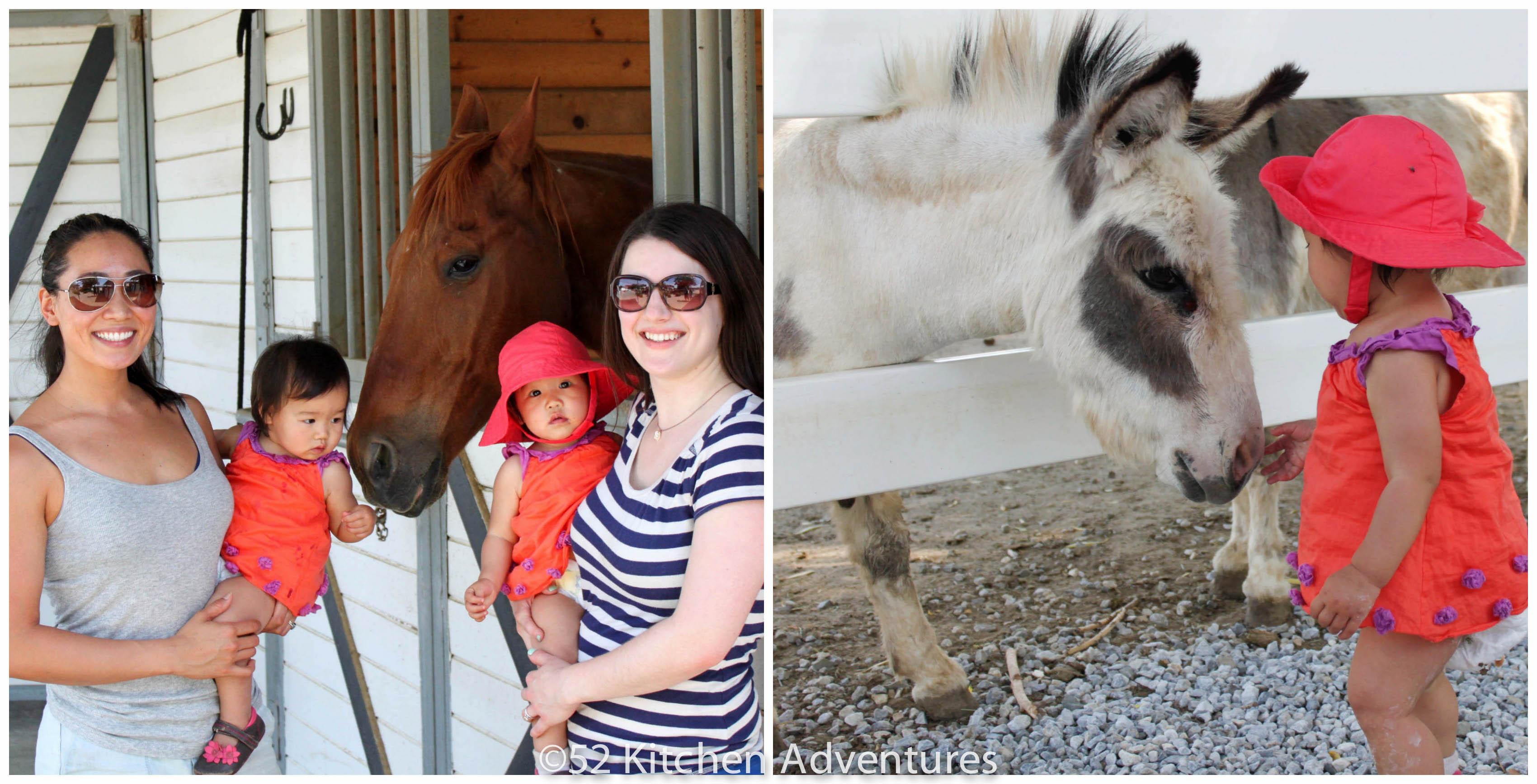 Salvador Family Farm Animals